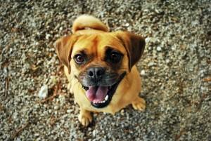 cane-alimentazione-crocchette